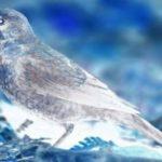 rustyblackbird